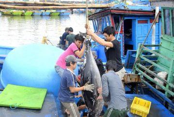 Làng 'cá ngừ đại dương' có tuổi đời trăm năm
