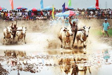 Điểm đến hấp dẫn của du lịch miền Tây Nam Bộ